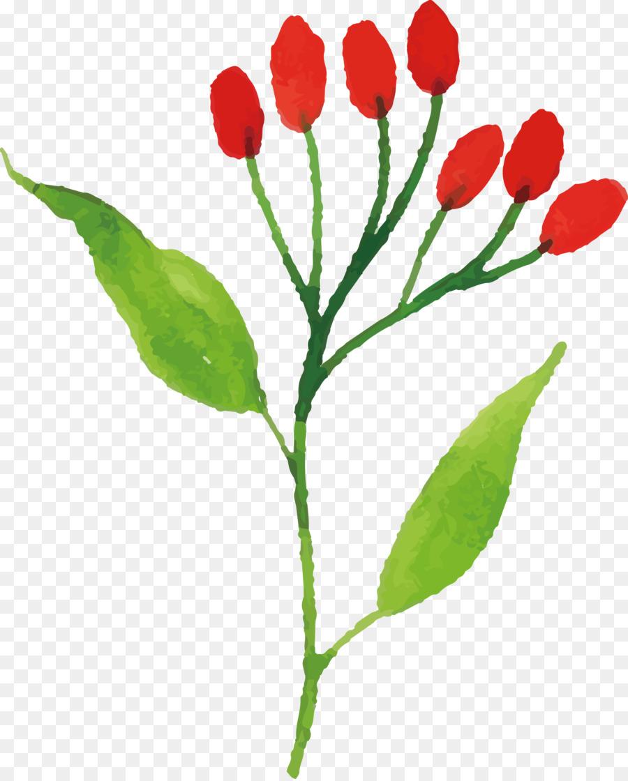 Descarga gratuita de Tulip, Tallo De La Planta, Las Flores Cortadas Imágen de Png