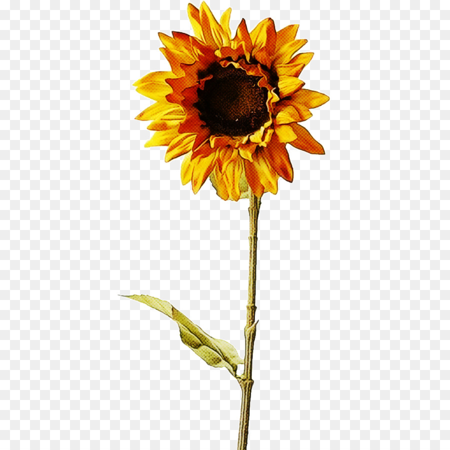 Descarga gratuita de Común De Girasol, Flor, Tallo De La Planta Imágen de Png