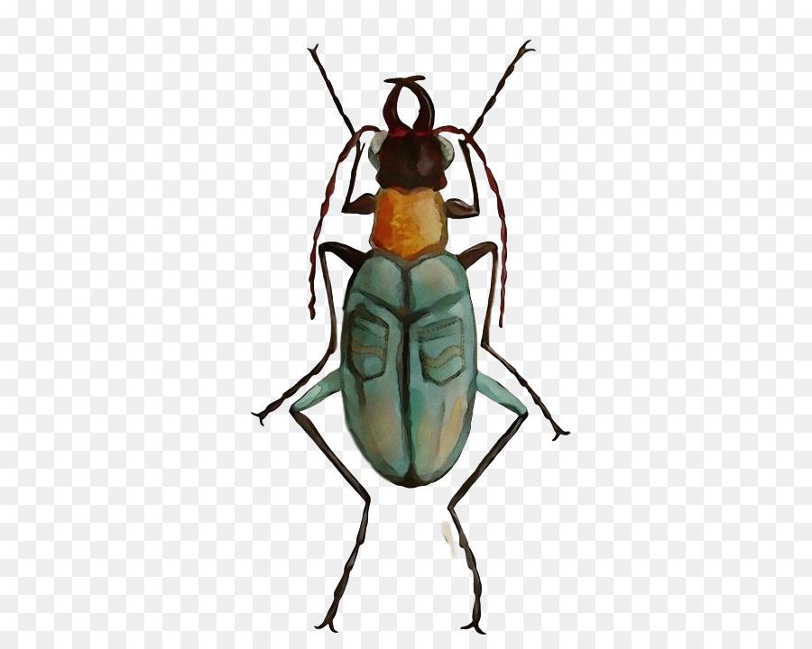Descarga gratuita de Los Insectos, Pintura A La Acuarela, Escarabajos Imágen de Png