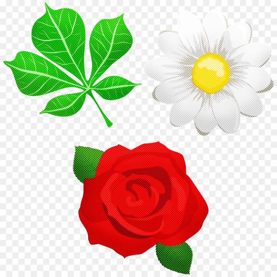 Descarga gratuita de Las Rosas De Jardín, Común Daisy, Rosa Imágen de Png