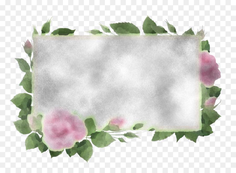 Descarga gratuita de Hoja, Diseño Floral, Familia De Las Rosas Imágen de Png