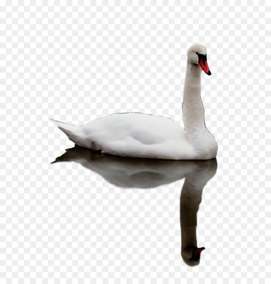 Descarga gratuita de Los Cisnes, Ganso, Pato Imágen de Png