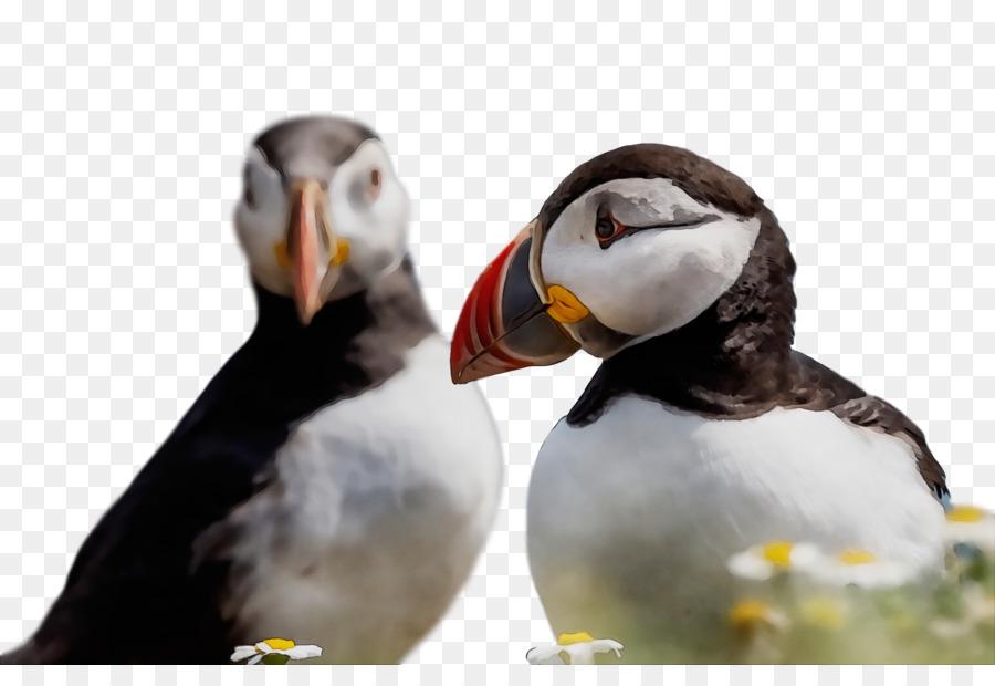 Descarga gratuita de Las Aves Playeras, Pico, La Ciencia Imágen de Png