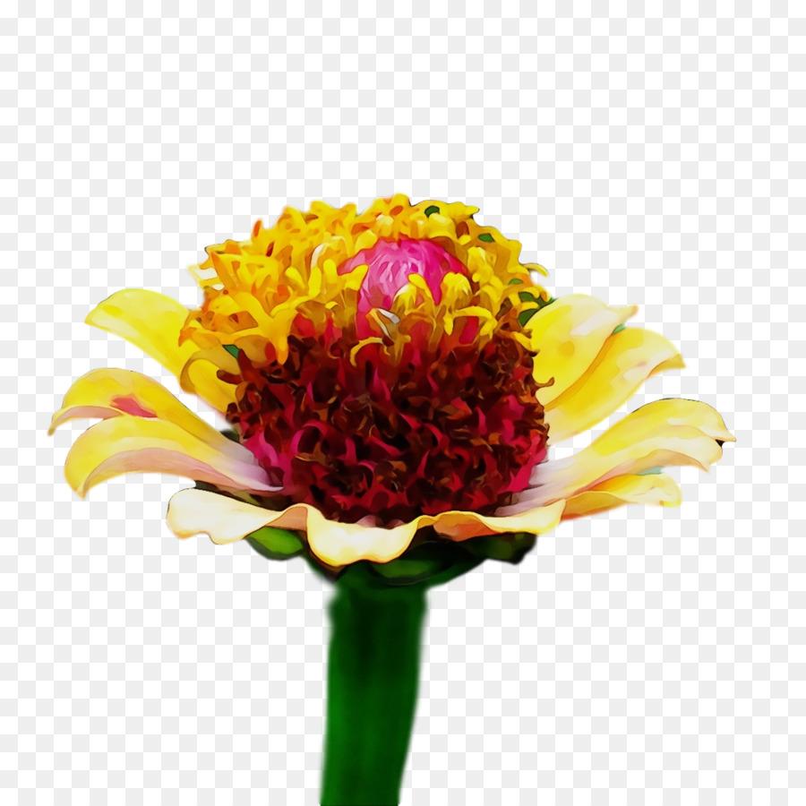 Descarga gratuita de Diseño Floral, Planta Anual, Ramo De Flores Imágen de Png