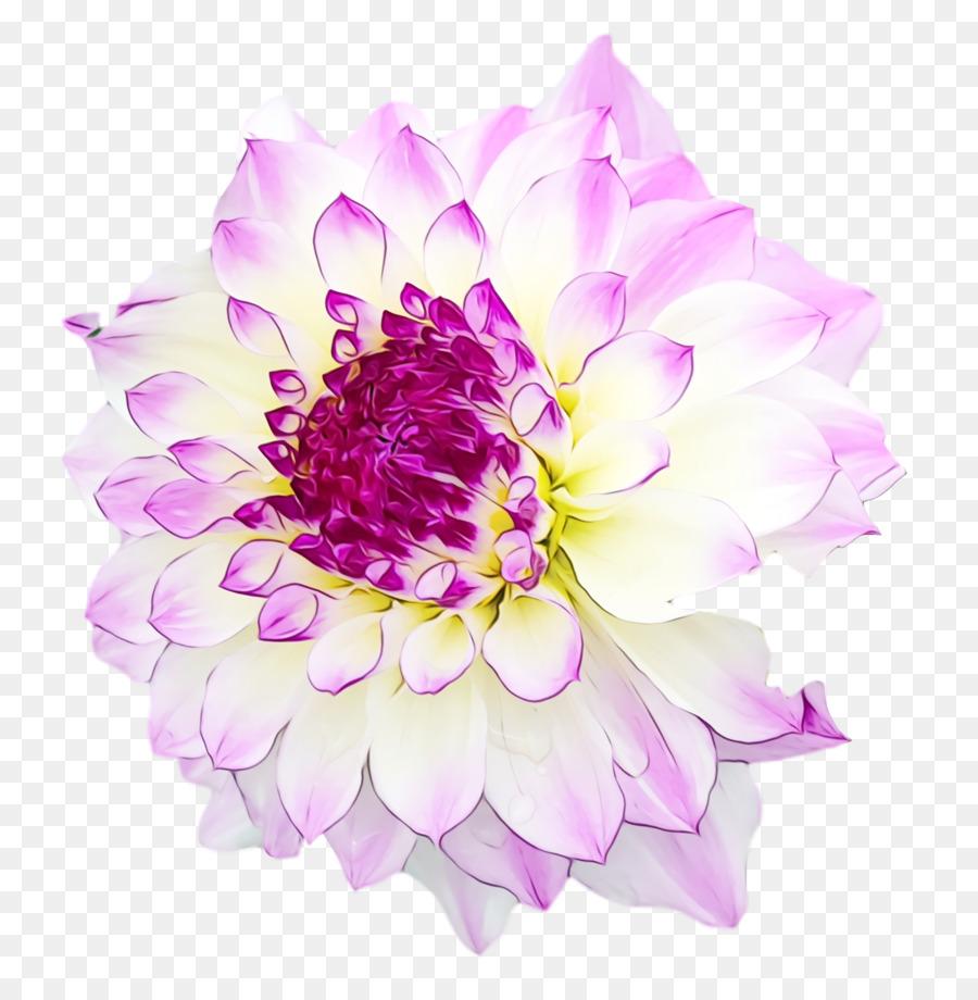 Descarga gratuita de Diseño Floral, Planta Anual, Las Flores Cortadas Imágen de Png