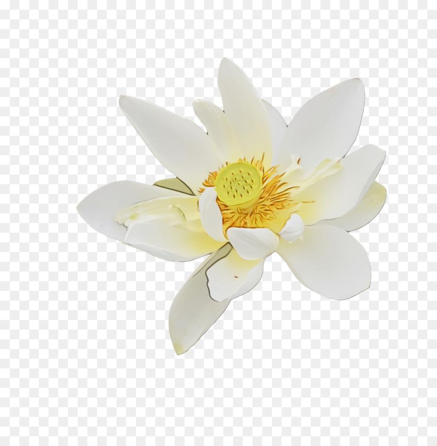 Descarga gratuita de Flor, Familia De Magnolia, Pétalo Imágen de Png