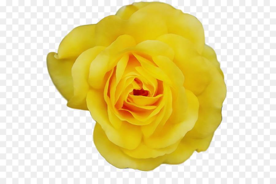 Descarga gratuita de Amarillo, Las Rosas De Jardín, Rosa Beach Imágen de Png