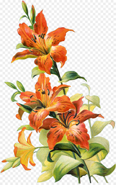 Descarga gratuita de Tiger Lily, Naranja Lily, Diseño Floral Imágen de Png