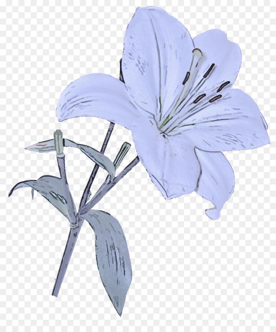 Descarga gratuita de Pétalo, Las Flores Cortadas, Flor Imágen de Png