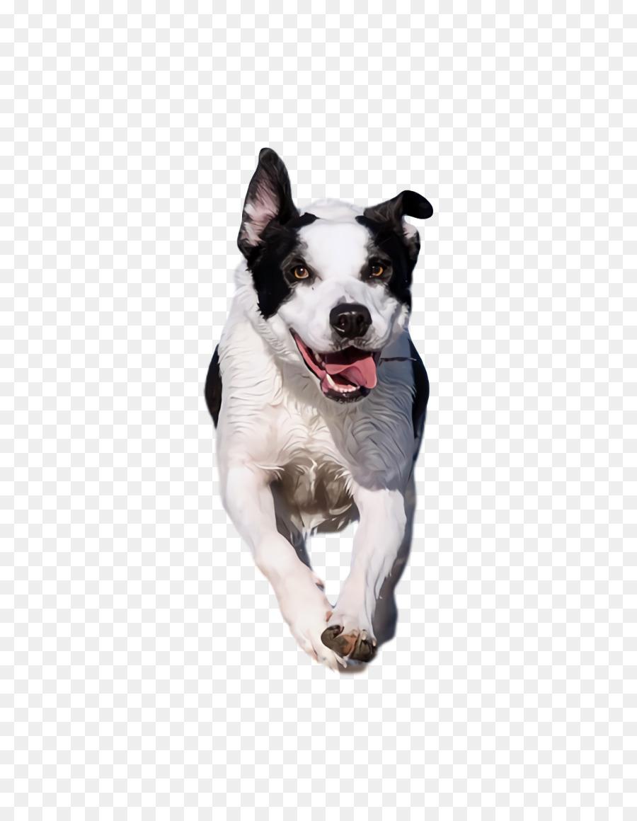 Descarga gratuita de Hocico, Correa, Terrier Imágen de Png