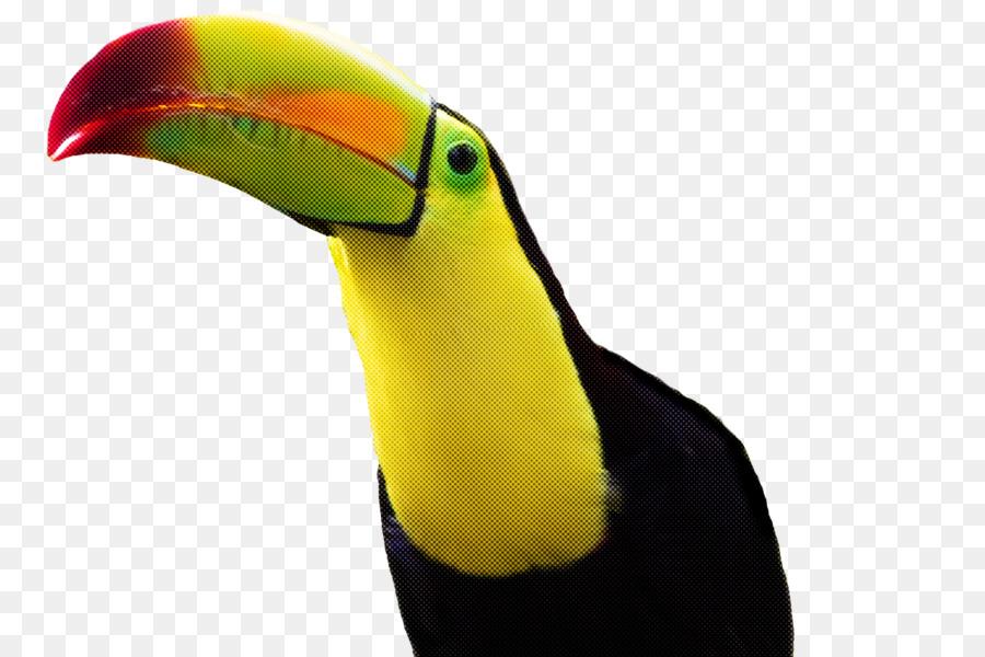 Descarga gratuita de Los Tucanes, Piciformes, Cálao Imágen de Png
