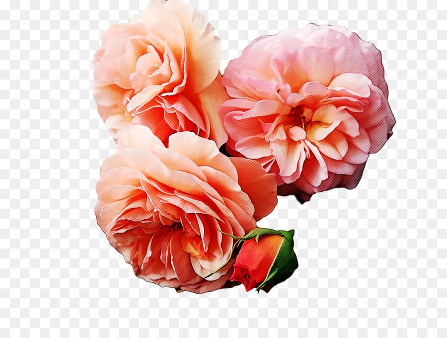 Descarga gratuita de Diseño Floral, Las Rosas De Jardín, Las Flores Cortadas Imágen de Png