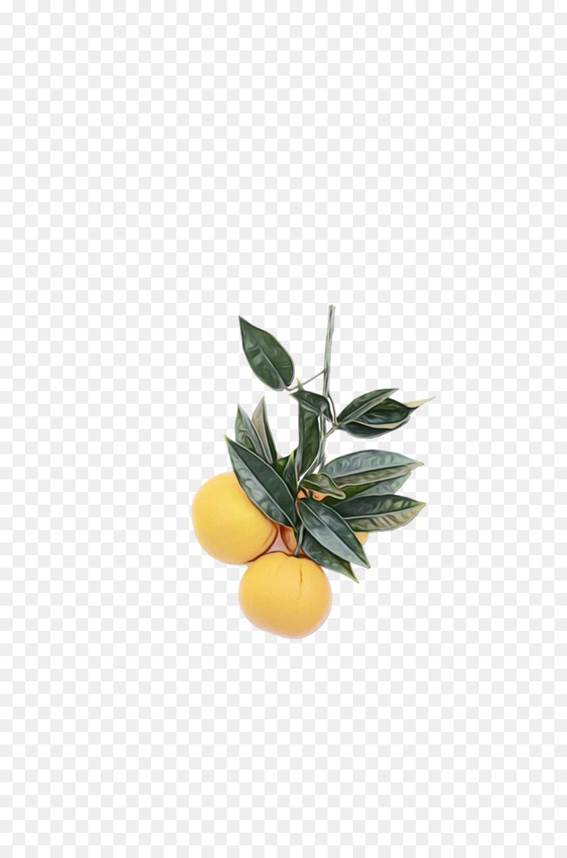 Descarga gratuita de Naranja Valencia, Las Plantas, Calamansi Imágen de Png