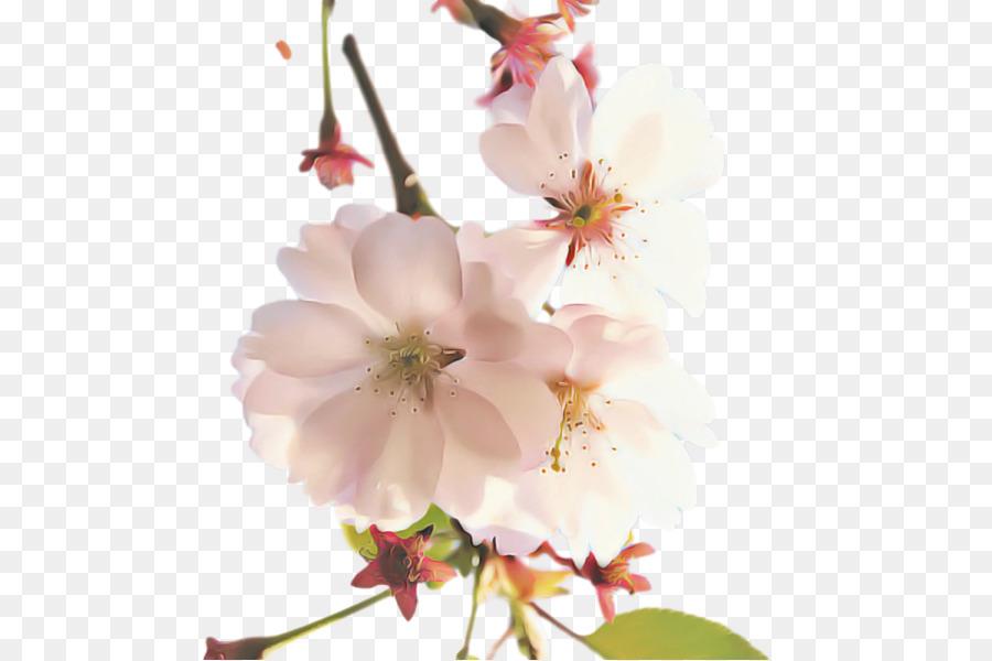 Descarga gratuita de Ciruelas, De Los Cerezos En Flor, Diseño Floral Imágen de Png