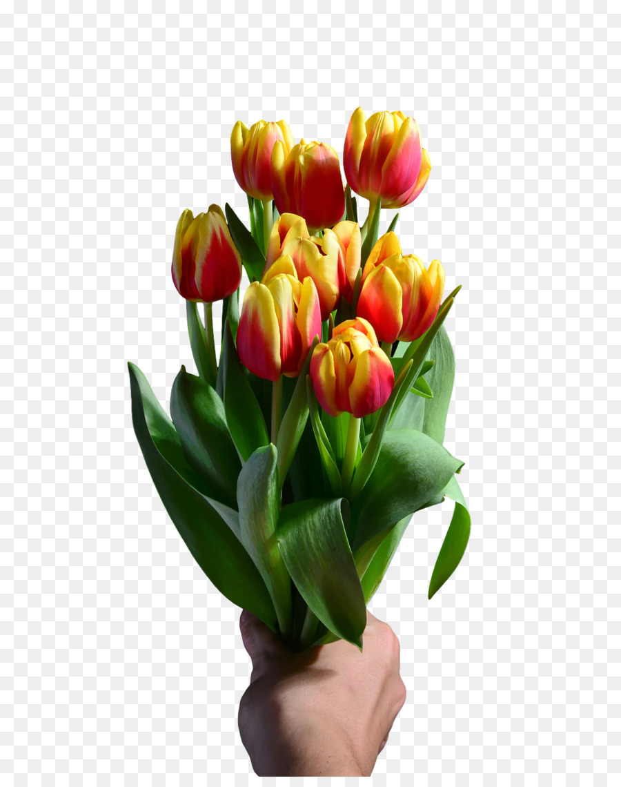 Descarga gratuita de Diseño Floral, Flor, Tulip Imágen de Png